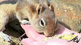 Cutest Little Chipmunk Video Ever