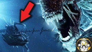 What Happened to the Xenomorph Queen After Alien vs Predator? - Theory