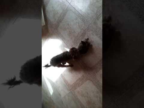 Xxx Mp4 Dog And Cat XXX LOL 3gp Sex