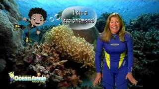 Clownfish and Sea Anemone Chapter from Explore Coral Reefs The Adventures of Ocean Annie