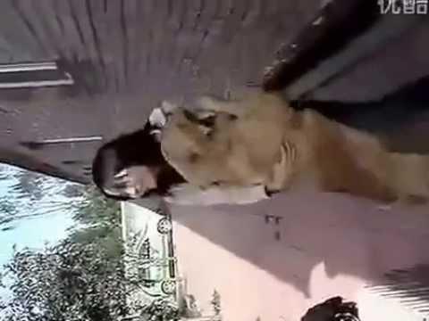 Dog Like Drink Milk Of The Girl