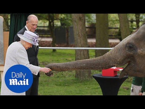 Xxx Mp4 The Queen Feeds Elephants At Whipsnade Zoo Daily Mail 3gp Sex