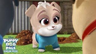 Meet Keia! 🐾 | Puppy Dog Pals | Disney Junior