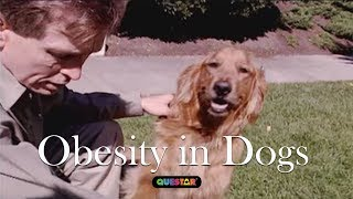 Obesity in Dogs - Amazing Dogs