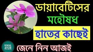 ডায়াবেটিস বা ব্লাড সুগার কমানোর সহজ ঘরোয়া উপায় | How To Cure Blood Sugar Forever Bangla