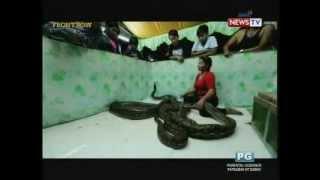Front Row: Babaeng may alagang tatlong malalaking sawa, kilalang atraksyon sa karnabal