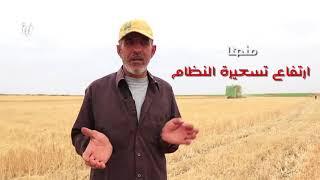 تعرّف على أبرز المشاكل والصعوبات التي تواجه موسم القمح لهذا العام