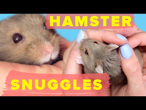 How To Teach Your Hamster To Snuggle