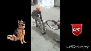 Pitbull dog fight