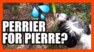 No-Drip Pet Drinking Nozzle Review | EpicReviewGuys CC