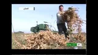 Iran harvesting Soybeans & Canola, Cooking oil products كشت كلزا و سويا توليد روغن خوراكي ايران