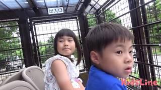 スーパージャングルバス 頭上でエサやり体験!! サファリパーク 動物園 お出かけ こうくんねみちゃん ZOO superjunglebus Feeding on head