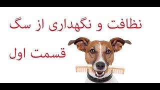 نظافت و نگهداری از سگ قسمت اول