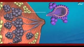 Pregnancy Parturation & Lactation