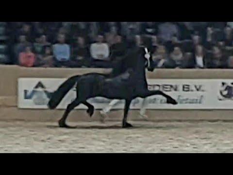 Xxx Mp4 Nane 492 Stallion Inspection 2019 Friesian Horse 3gp Sex