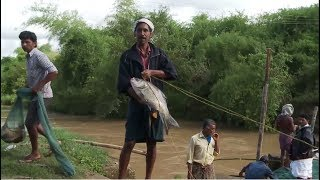 Kerala Monsoon Traditional Fishing  | Compilation | Big Fish Hunt in Rainy Season | Kerala