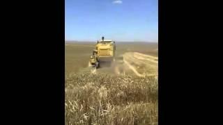 Buğday (Ekin) Nasıl Biçilir?