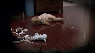 What Caused This Playful Kitty To Collapse? | My Cat From Hell