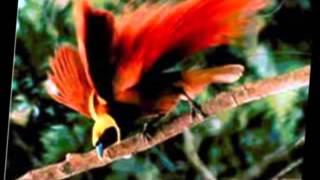 Misim Yu - Tarvin Toune [Papua New Guinea Island Vibezzz 2015]