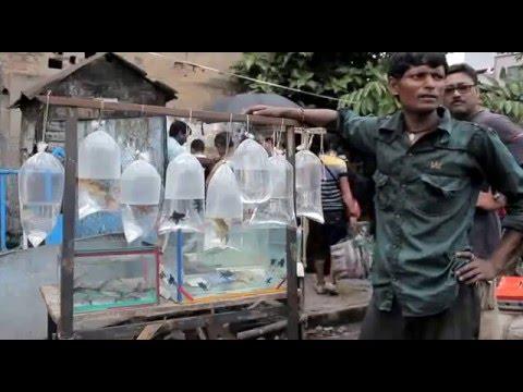 Kolkata Fish Market  by Subrata Giri