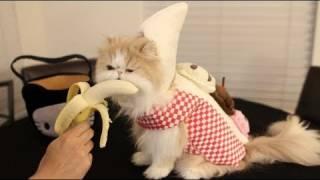 Halloween Cute Banana Cat
