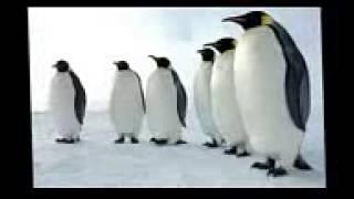 موسيقى رقصة البطريق