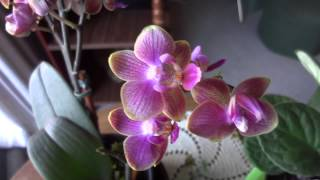 The Orchid Part 5