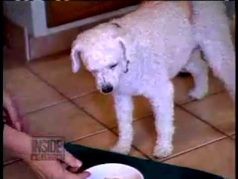 Cachorro narcoléptico