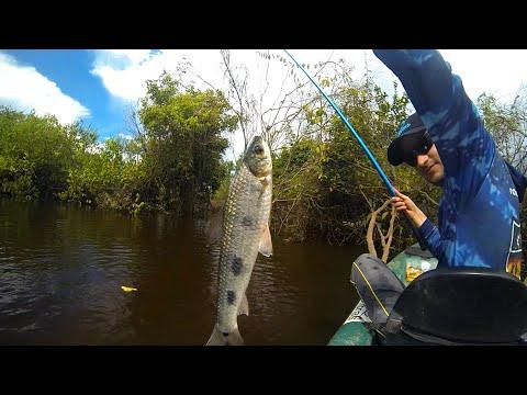 Pesca de piau com varinha de mão. Dicas técnica e prática.