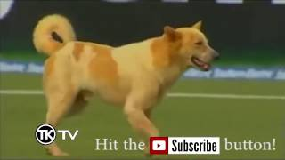 Animals on the field - CRICKET FUNNY COMPILATION