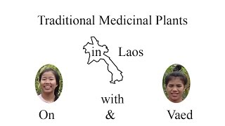 Intro medicinal plants used in Laos - by Laotian girls On and Vaed
