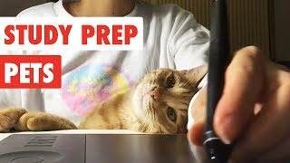 Study Prep Pets | Funny Pet Video Compilation 2017