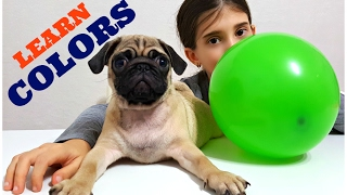 Learn Colors with Balloons for Children, Toddlers and Babies - Finger Family Songs & Real Puppy