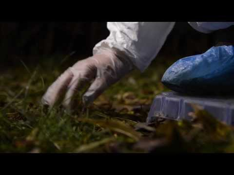 Introduction to Crime Scenes