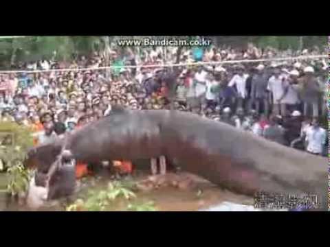 Huge monster in vietnam