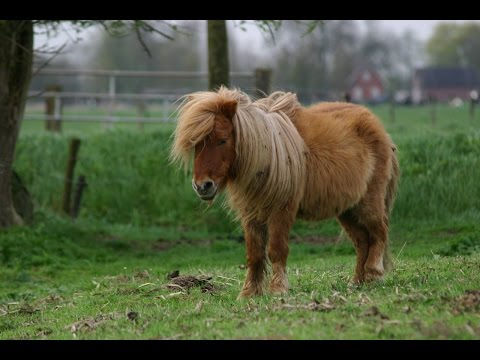 Man Has Sex With Shetland Pony!!