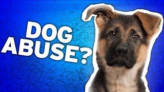 A Dog's Purpose Animal Abuse: PETA Responds