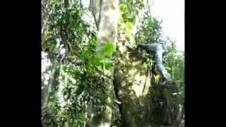Amazon Peru Info
