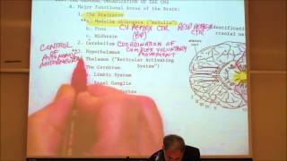 Nervous System Review by professor fink