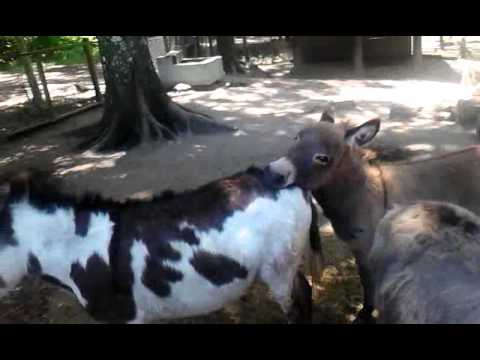Xxx donkeys