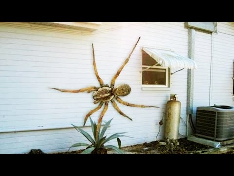 12 World s Largest Spiders