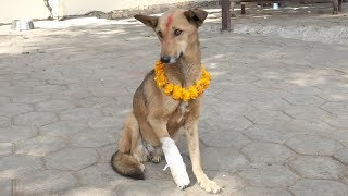 Stray Dogs Fed and Cared For During