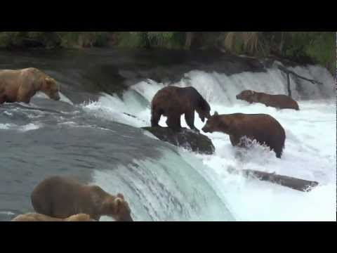 Brooks Falls Katmai NP Alaska video compilation 26 07 2012