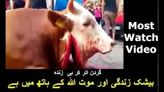 Qurbani 2017 Eid Ul Adha Bakra Eid in Pakistan ( heart touching )