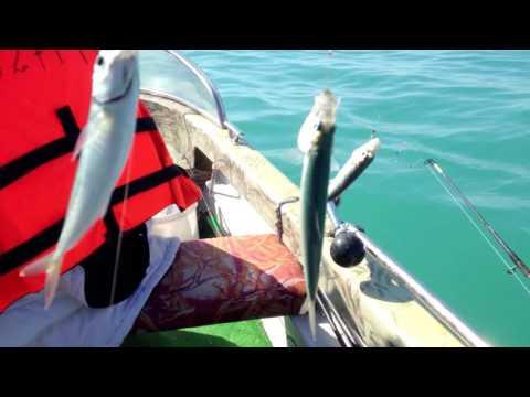 лов сельди на белом море видео