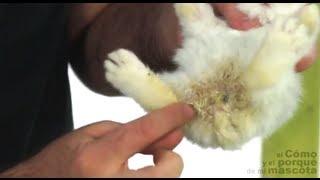 CONEJOS - Conejo con diarrea. ¿Cómo actuar?