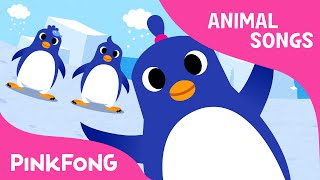 The Penguin Dance | Animal Songs | PINKFONG Songs for Children