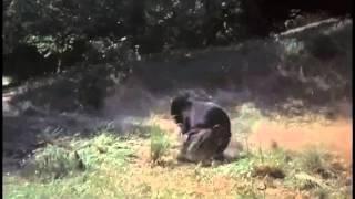 old yeller vs the bear