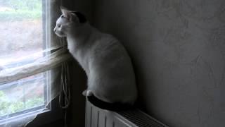 Mon chat Youmi voit passer des oiseaux et ça l'énerve!!!