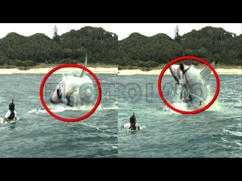 Los Ataques de Tiburones mas Brutales videos